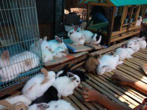 子ウサギはかわいいのですが、飼うには設備が必要ですね。